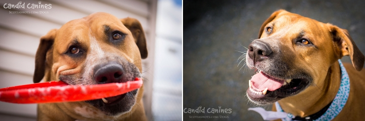 Halifax dog photographer Tigg