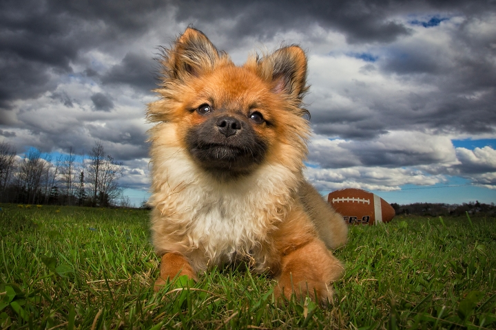 Halifax dog photographer with rescue puppy